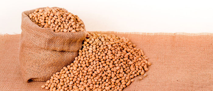 Soybeans Photo